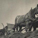 Venkovská selanka – oslava (1. část)
